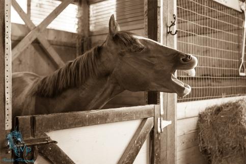 Cowboy being Coyboy - copyright vandala-photograpy